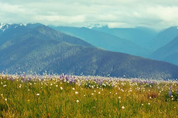 Prato di montagna nella stagione estiva