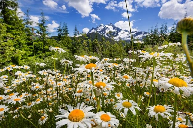 Prato di montagna in una giornata di sole. paesaggio estivo naturale. montagne in alaska.