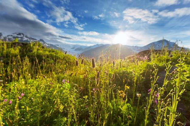 Prato di montagna in una giornata di sole.
