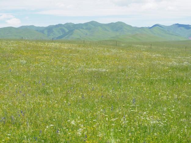 Mountain meadows e sky