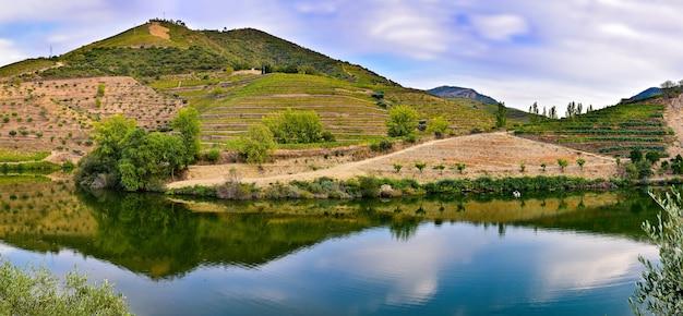 Panorama di montagna dei vigneti riflessa nel fiume