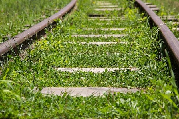 La ferrovia di montagna attraversa il bosco oltre l'orizzonte
