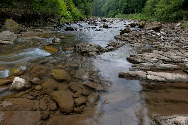 Il fiume di montagna scorre attraverso la foresta. bellissimo paesaggio dei carpazi con acqua cristallina in un fiume di montagna.