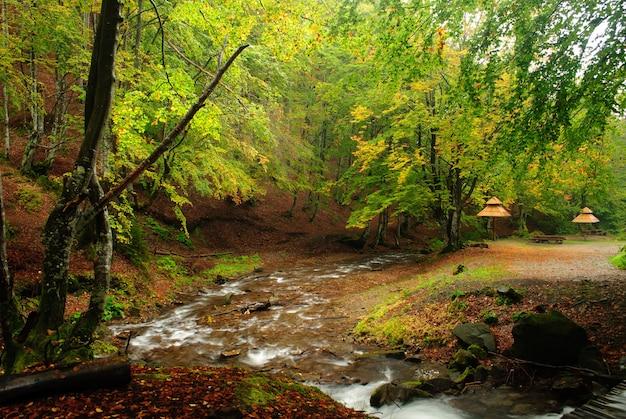 Il fiume di montagna scorre nella foresta autunnale
