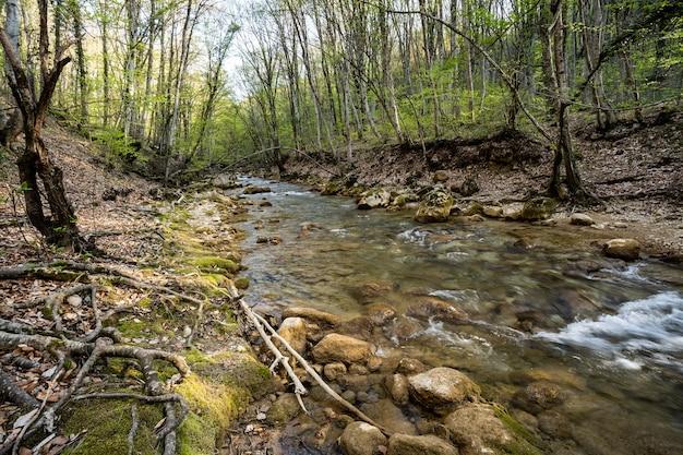 Fiume di montagna nella riserva naturale del parco nazionale protezione di foreste e bacini idrici