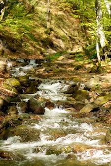 Fiume di montagna con, paesaggio forestale. tranquillo scenario di cascate nel mezzo della foresta verde