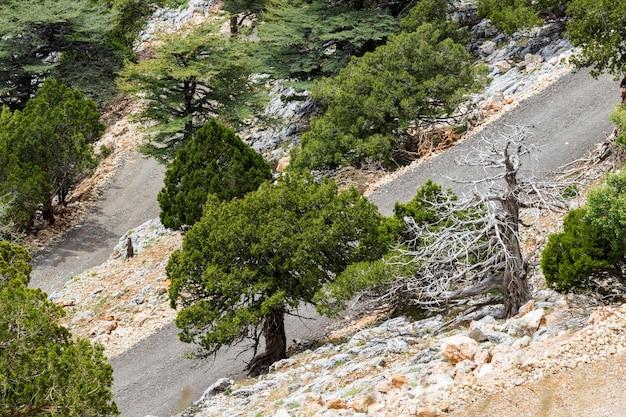Strada di montagna tra alberi e pietre