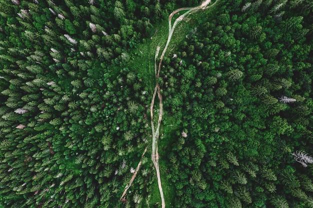 Strada di montagna attraverso la verde pineta. bellissimo paesaggio naturale