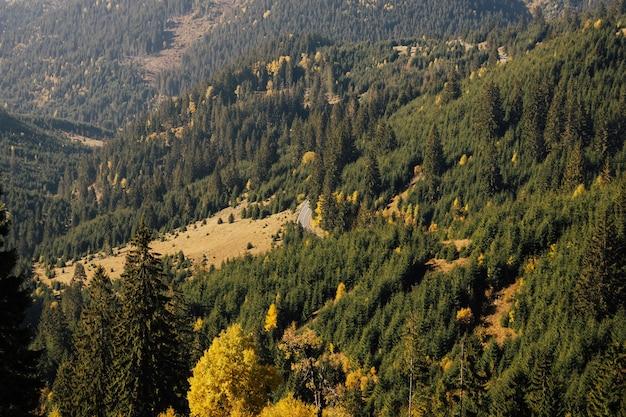Scena di montagna nella giornata di sole. alte montagne con una fitta foresta di pini.