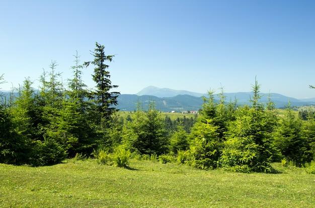 Paesaggio estivo di montagna con cielo blu