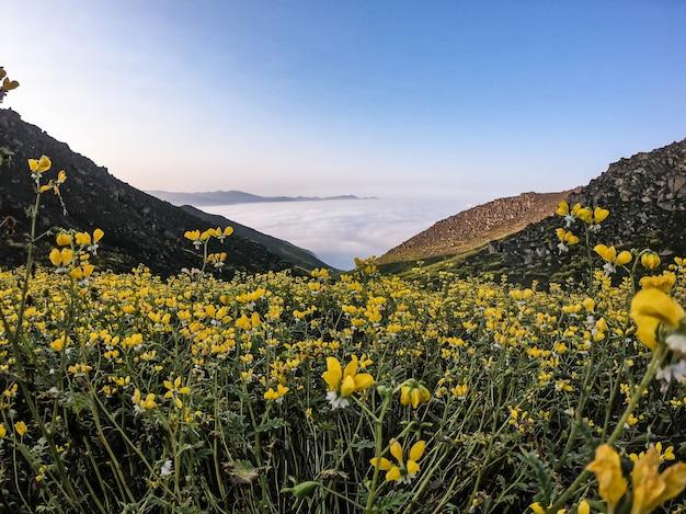 Paesaggio floreale della valle di montagna fiori gialli