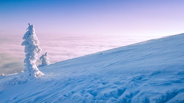 Paesaggio invernale di montagna. alberi innevati in cima alla montagna all'alba.