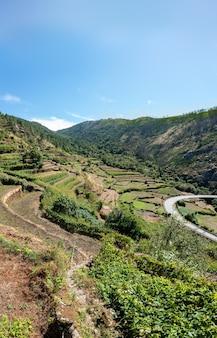 Montagne con viti e strada curva