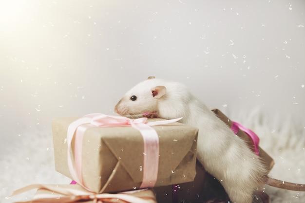 Un topo su uno sfondo di capodanno