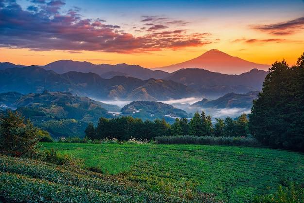Mt. fuji con il campo del tè verde ad alba a shizuoka, giappone.