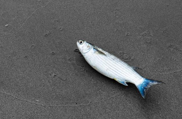 Pesce di muggine sulla spiaggia.