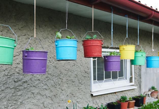 Secchi di metallo multicolori dipinti in diversi colori luminosi con piante piantate all'interno, appesi sotto il tetto di una casa