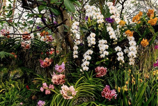 Multi fiore di orchidea nel prato primaverile sullo sfondo del giardino.