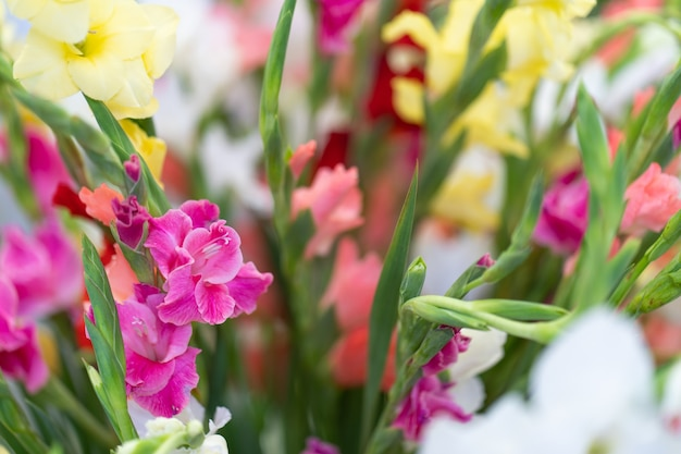 Fiori multicolori di gladiolo in vaso