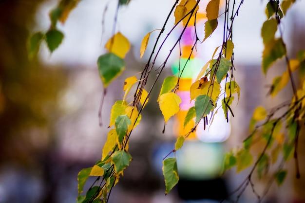 Betulla multicolore lascia su sfocate di luci della città