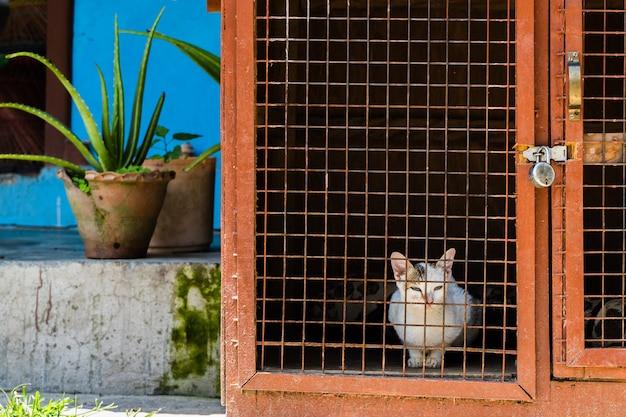 Il gatto domestico multicolore è seduto in una gabbia vicino alla casa. città di pokhara, nepal