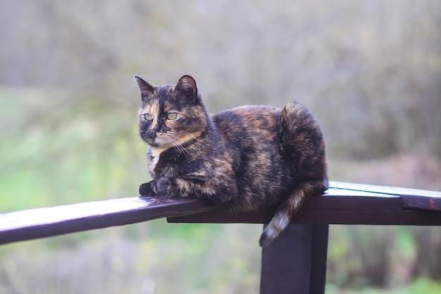 Gatto domestico multicolore che si rilassa sulla ringhiera di legno all'aperto sullo sfondo della natura primaverile.