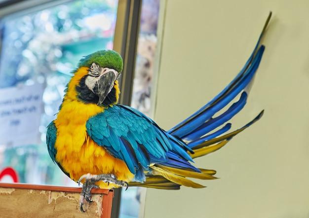 Pappagallo multicolore dell'ara che si siede sul primo piano della gabbia.