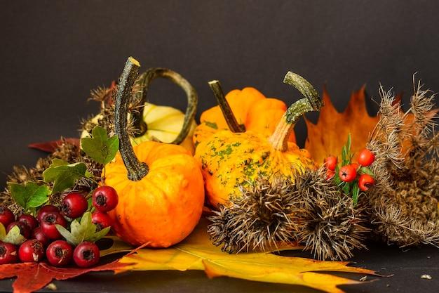 Zucche multicolori e spezie di fiori secchi