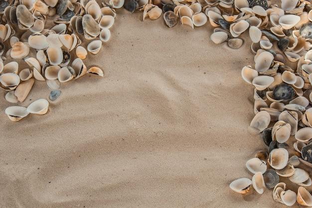 Conchiglie multicolori di fiume giacciono caoticamente sulla sabbia vicino al mare
