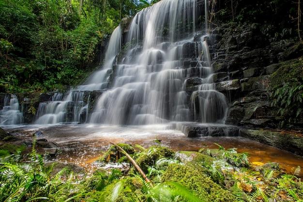 La cascata di mun-dang con il fiore dell'antirrhinum nella provincia di petchaboon, tailandia