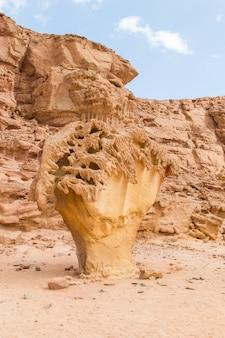 Roccia di funghi. egitto, deserto, la penisola del sinai, dahab.