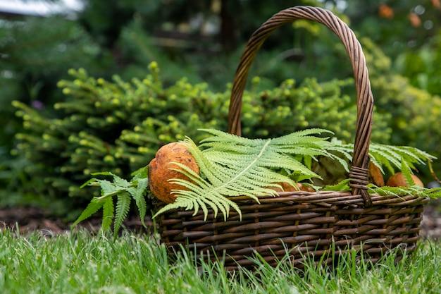 I funghi vengono raccolti in un cestino e accuratamente coperti con un foglio di felce Foto Premium