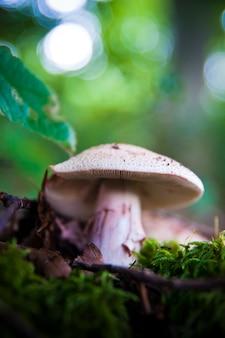 Funghi nella foresta molto colorati circondati da muschio