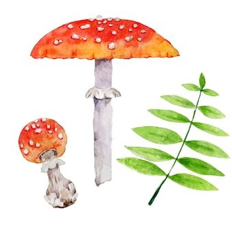 Funghi e foglie verdi