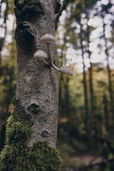 Funghi che crescono su un tronco d'albero nella foresta irati forest in autunno