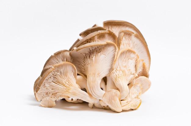 Funghi funghi ostrica isolati su bianco
