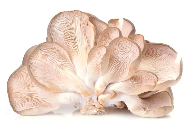 Ostrica ai funghi