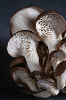 Funghi pleurotus sul tavolo