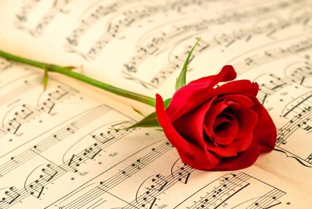 Note musicali e rosa rossa. messa a fuoco selettiva, profondità di campo superficiale.