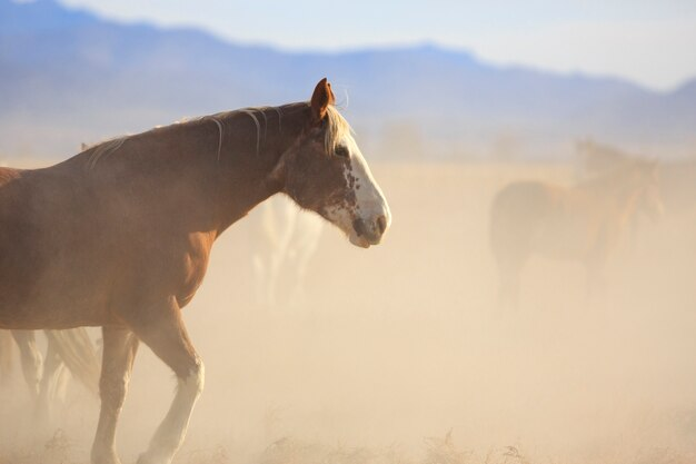 Mustang horse in dusty herd