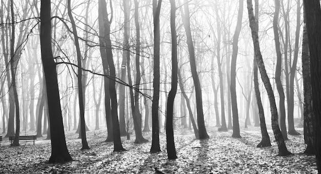 Misteriosa vecchia foresta oscura nella nebbia, in bianco e nero