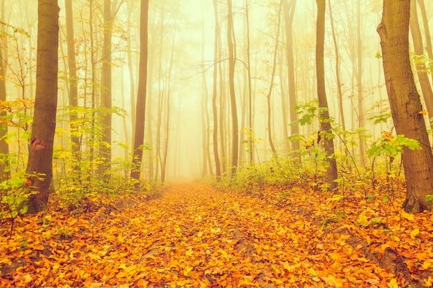 Foresta nebbiosa da favola misteriosa durante l'autunno.