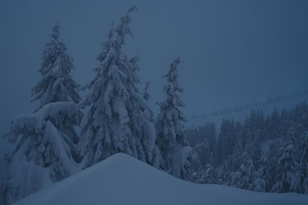 Misterioso paesaggio invernale con cumuli di neve nel bosco di abeti. alberi innevati al tramonto