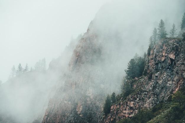 Mistero drammatico vista di conifere sulla montagna rocciosa in una fitta nebbia