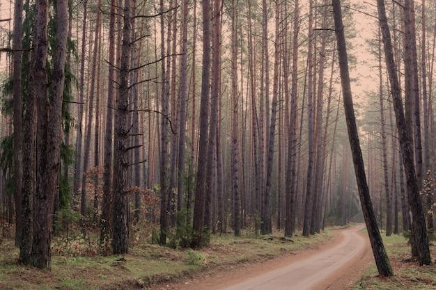 Mistica foresta autunnale con nebbia