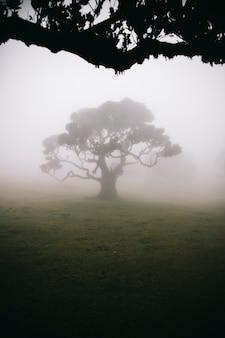 Mystical fanal nella foresta nebbiosa di laurisilva