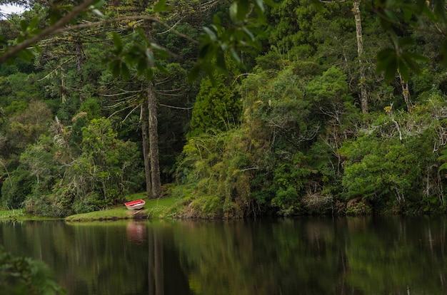 Mistica foresta verde della terra muscosa del brasile