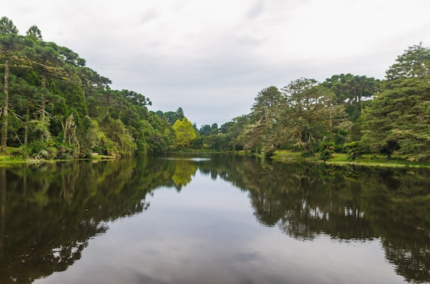 Mistica foresta verde del brasile