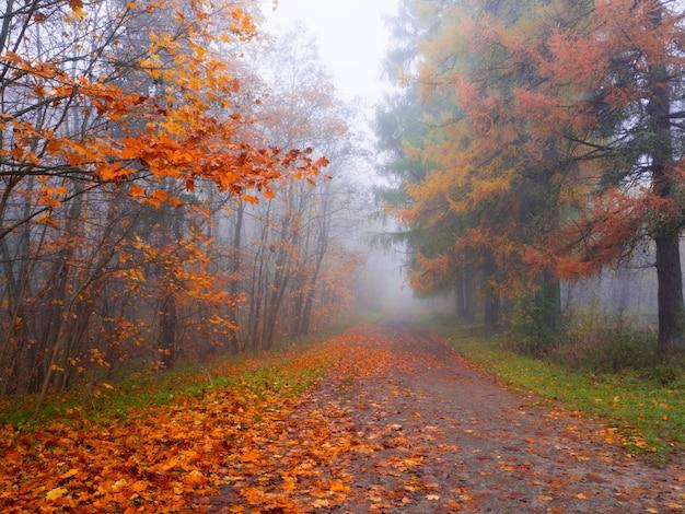 Paesaggio mistico con nebbia blu nella foresta di autunno