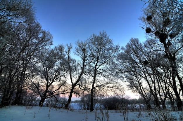 Mistico ipnotizzante paesaggio invernale uno spesso strato di neve si trova nella foresta tra gli alberi.
